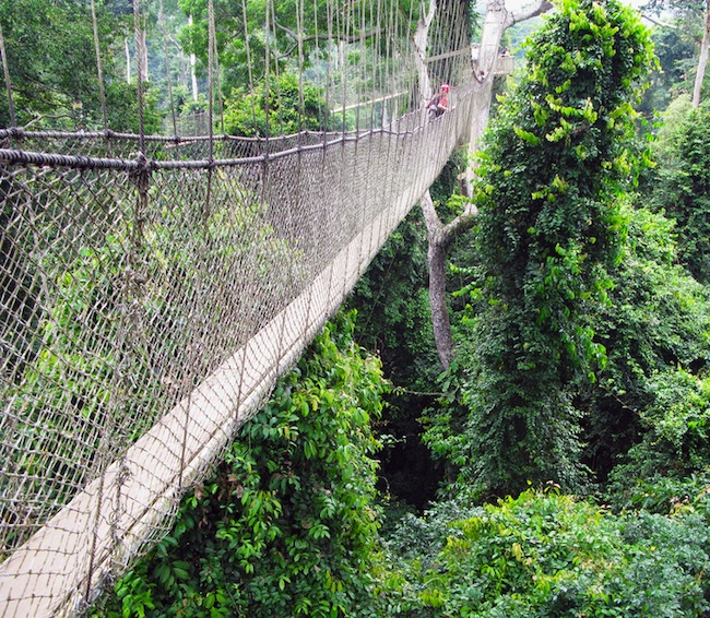 Aerial walkway at Kakum in Ghana