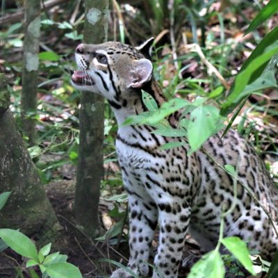 Wildlife Adventure Tour to Belize Zoo