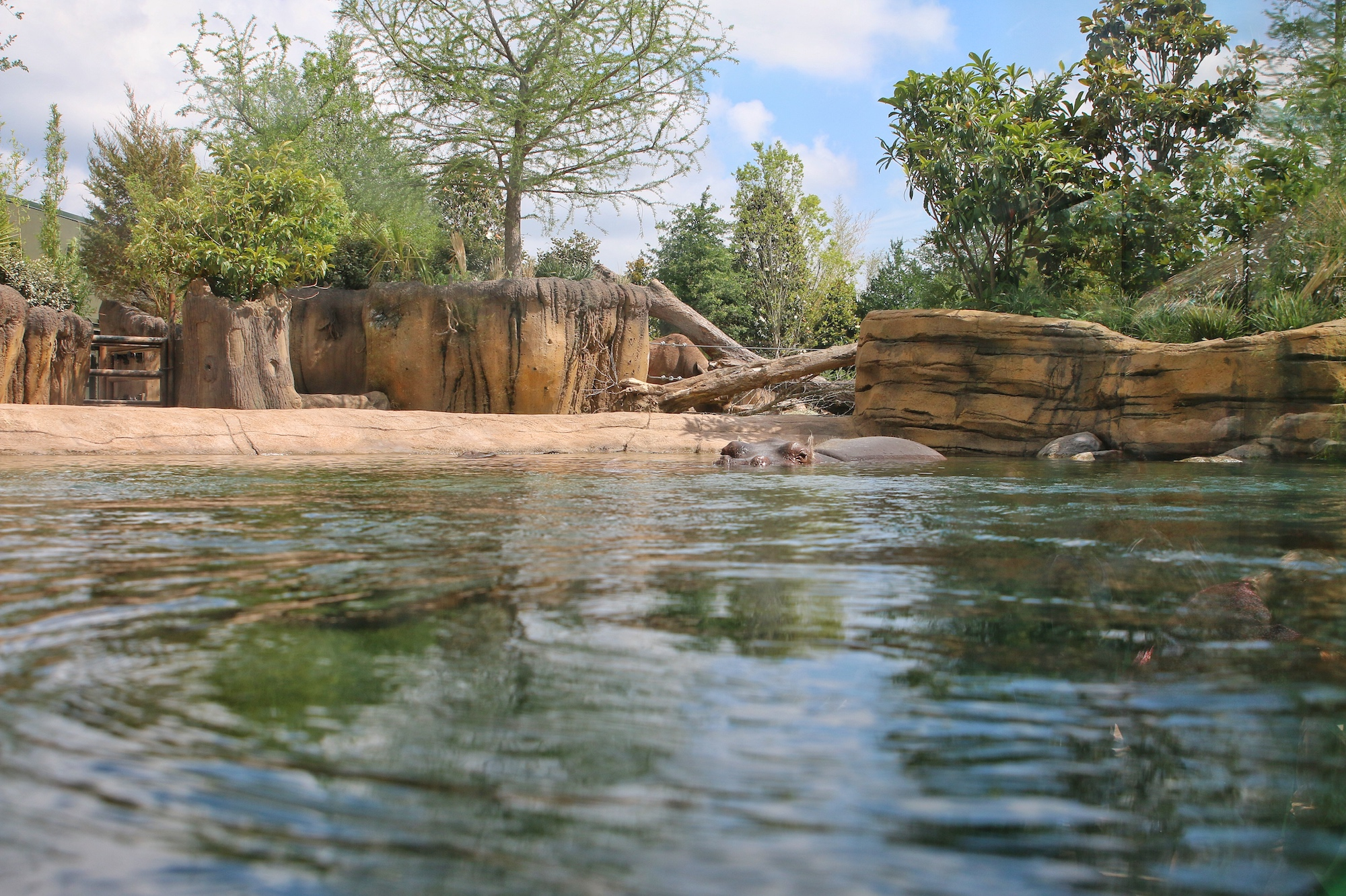 new hippo exhibit at Fort Worth zoo