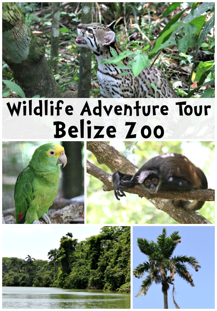 Wildlife Adventure Tour To Belize Zoo Oh The Places We