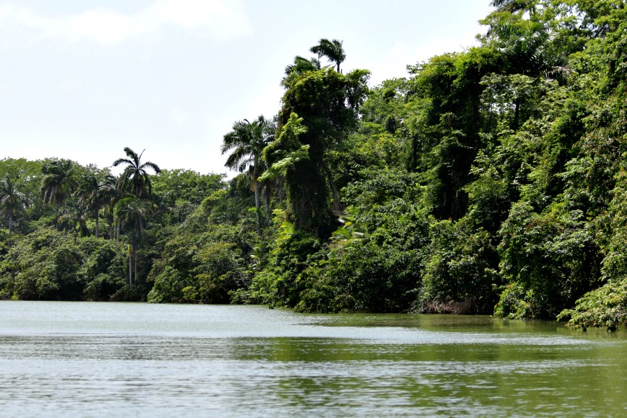 river boat ride through rain forest in belize