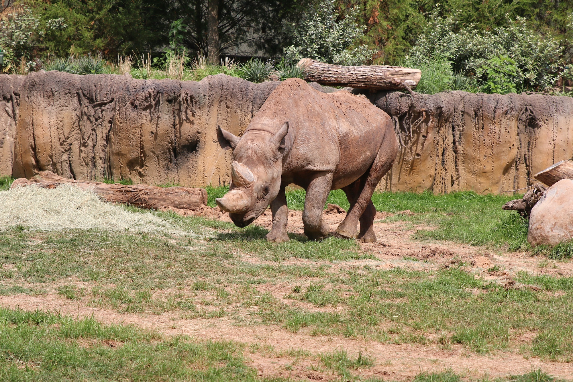 Fort Worth zoo rhinos