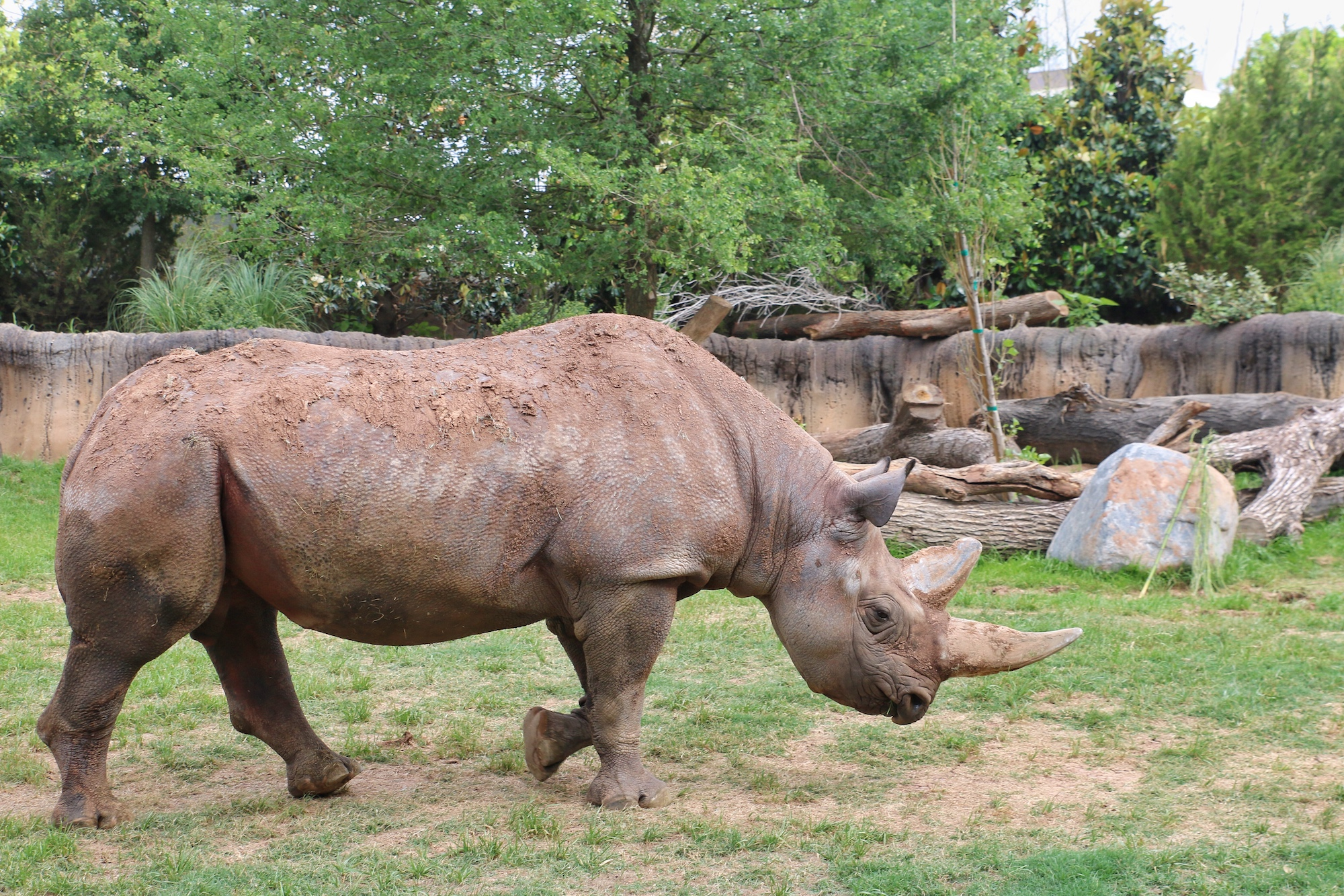 rhino viewing area at Fort Worth zoo